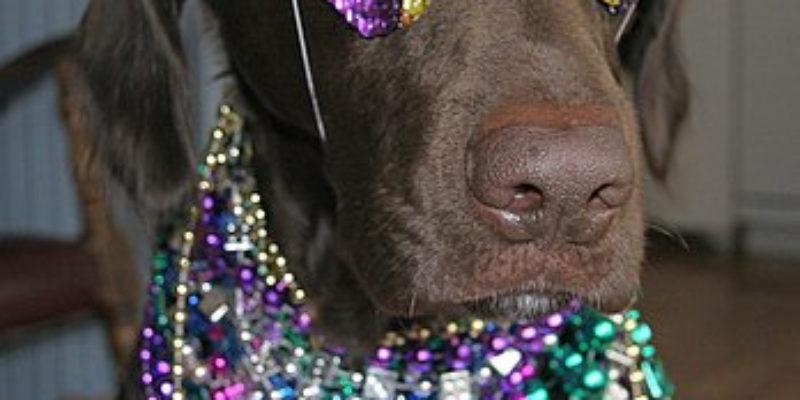 Getting Drunker Than A Monkey On Mardi Gras…
