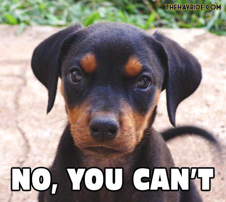 Dog Wars : Farmer vs Bird No-you-cant