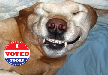 Democrat Voter Drives Are Going To The Dogs…And Cats…And The Dead, Etc.