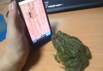Pissing Off A Frog