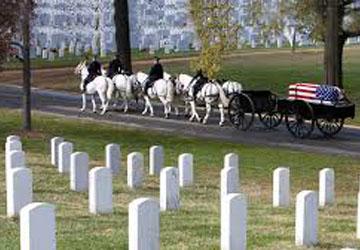 Arlington -Veterans Day