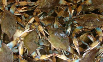 Legal feeding frenzy continues four years after the spill