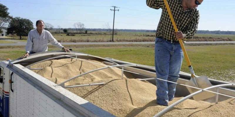 Ending The Cuban Embargo Would Be A Big Win For Louisiana's Rice Industry