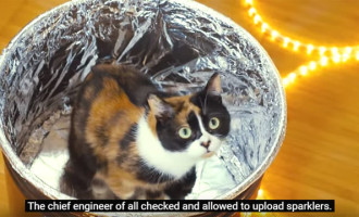 VIDEO: 10,000 Sparklers, And A Cat