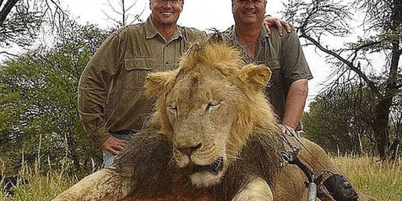 The Law Of Unintended Consequences Comes To Lions In Zimbabwe