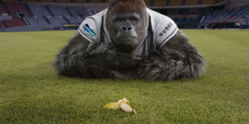 Petition To Rename 'New Orleans Zephyrs' After Harambe Already Getting Hundreds Of Signatures