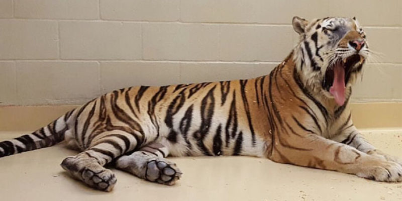 We've Seen The Last Of Mike VI…