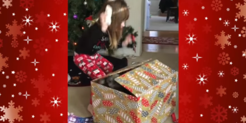 VIDEO: 3 Year Old Girl Learns That You Can't Trust A Cat