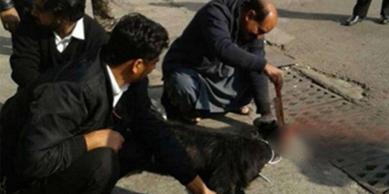 WAIT, WHAT? Pakistani Airline Safety Improvement Efforts Include Sacrificing A Goat On The Tarmac