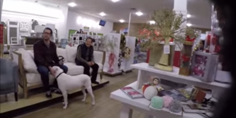 VIDEO: Here's What Happens When A Transgender Dog Goes Shopping