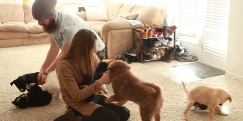 VIDEO: The Wife's Reaction To Coming Home To A House Full Of Puppies Is Priceless