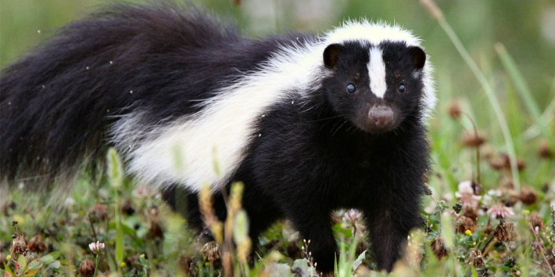 BREAKING: The Skunk And Alan Seabaugh