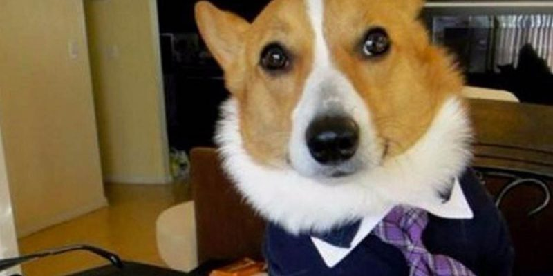 The Louisiana Supreme Court's Lawyer-Dog Ruling Is Unintentionally Hilarious