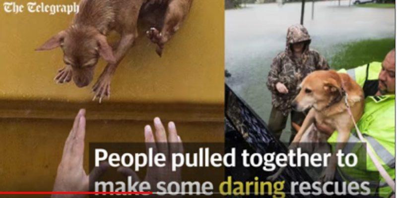 Heartwarming: Hurricane Harvey Animal Rescue Stories [videos]