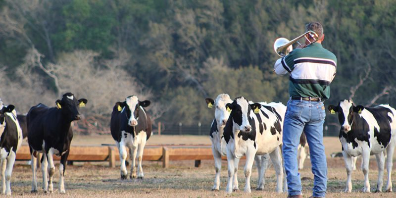 Florida rancher holds jazz concert for cows, they come running [videos]