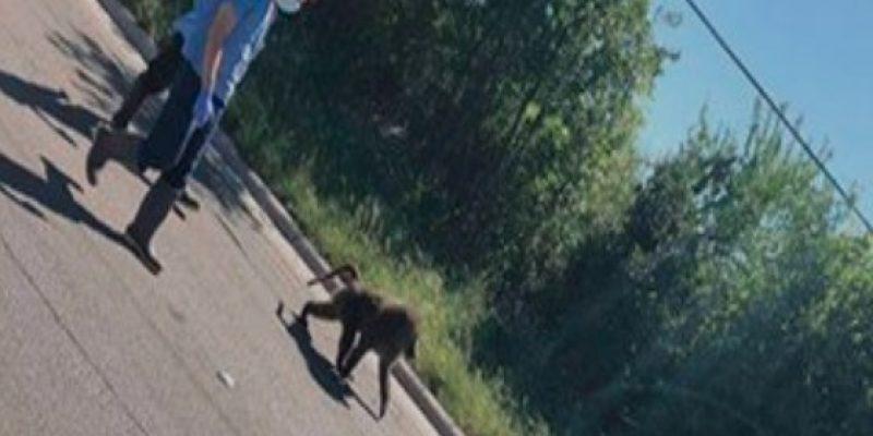 Yep… Baboons were running around Texas [video]