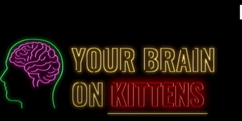 Neuroscientist explains why people can't not love kittens … True? [video]