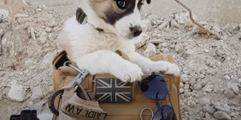 MUST WATCH: Soldier saves puppy from war zone and can't live without her [video]