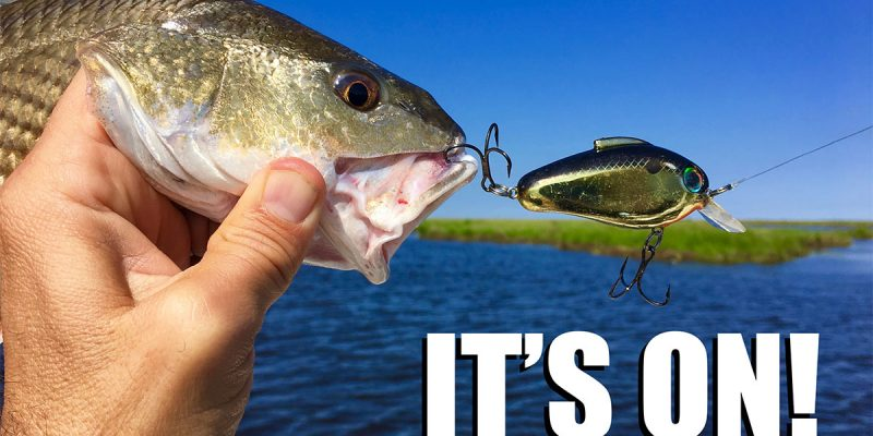 MASSON: Redfish Are CLOBBERING This Bait Right Now