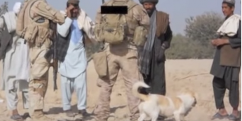 A Marine saves a dog from Afghanistan and the dog saves him [videos]