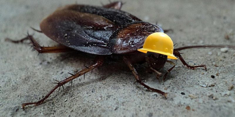 Texas Monthly Decries Incivility By Calling Representative 'Cockroach'