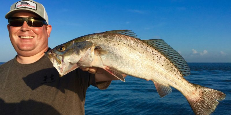 MARSH MAN MASSON: Where Are The Speckled Trout? We Found Them!