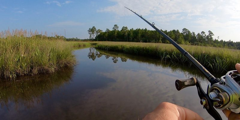 MARSH MAN MASSON: What Can I Find In Mississippi's Marshes?
