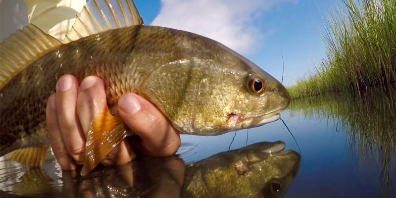 MARSH MAN MASSON: Can I Catch A Limit Of Redfish Using Only Local Lures?