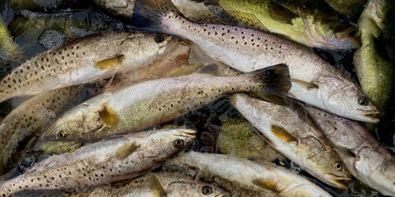 MARSH MAN MASSON: Fall Means Easy, Easy, Easy Fishing!