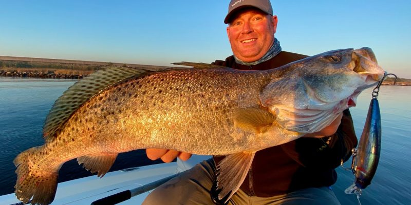 MARSH MAN MASSON: Big Speckled Trout In Popular Community Hole!