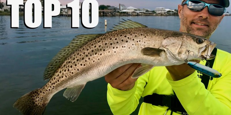 MARSH MAN MASSON: Best Fishing Moments Of The Year
