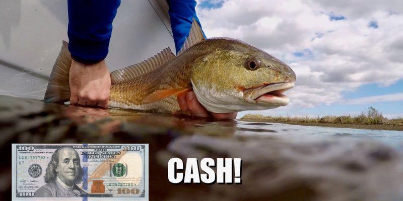 MARSH MAN MASSON: Lucrative Quest For Heaviest Redfish & Bass