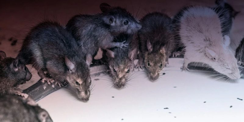 JBE's New Website Seeks To Build A Confederacy Of Rats