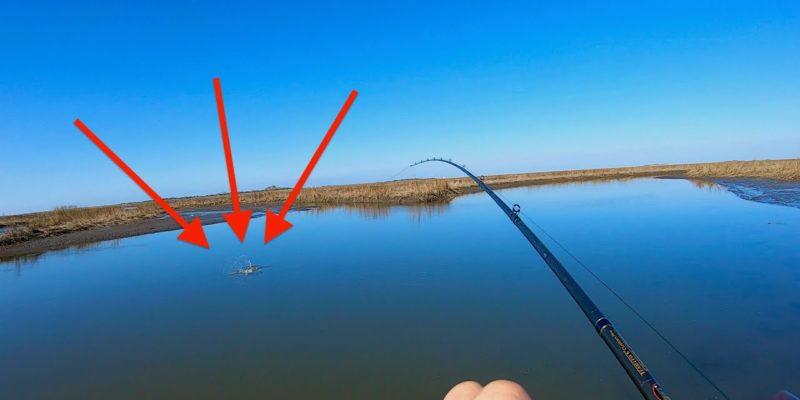 MARSH MAN MASSON: Whacking Fish In Transitioning Marshes