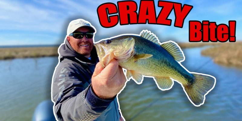 MARSH MAN MASSON: A Bunch Of Specks, And Then A BUNCH Of Bass!