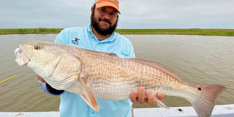 MARSH MAN MASSON: Bait Change Makes A world Of Difference!
