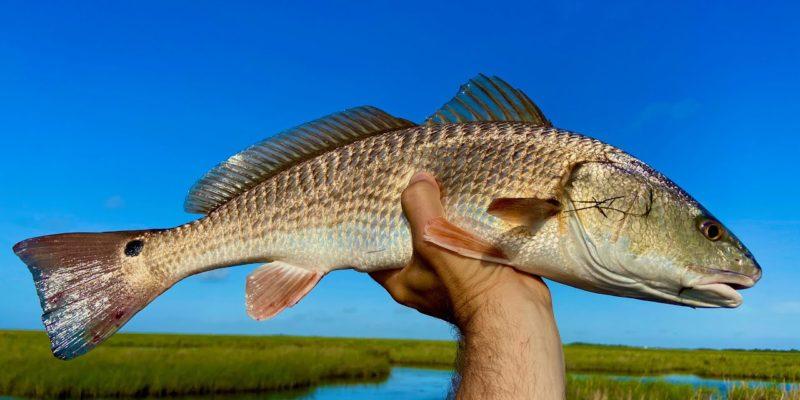 MARSH MAN MASSON: Wanna Catch Fish In The Marsh?