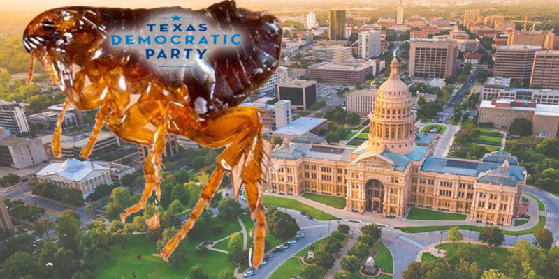 """Seems Like There's A """"Flee"""" Infestation In Texas"""